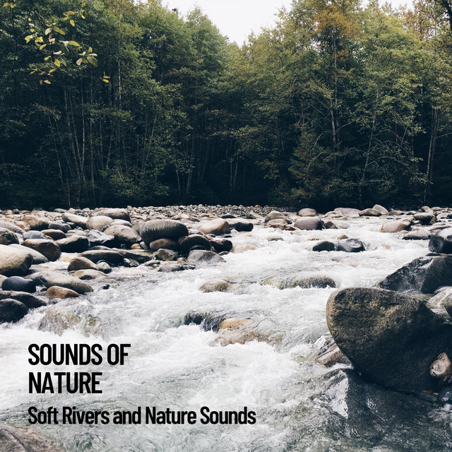 Sounds of Nature: Soft Rivers and Nature Sounds