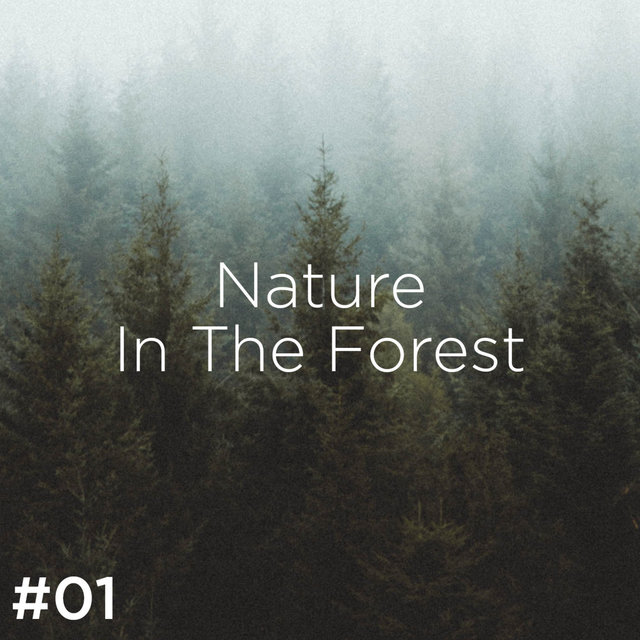 #01 Nature Sounds In The Forest