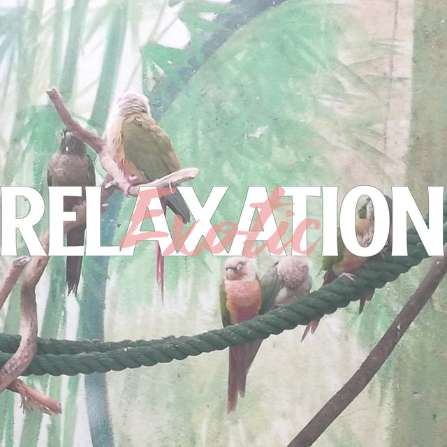 Exotic Relaxation - Ambient Nature Sounds Straight from the Depths of the Jungle, Tropical Birds, Ocean Waves and Rain, Wild River, Colors and Smells, Waterfall