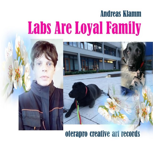 Labs Are Loyal Family