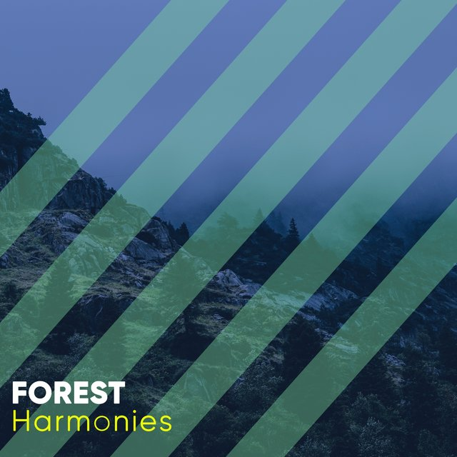 Quiet Natural Forest Harmonies