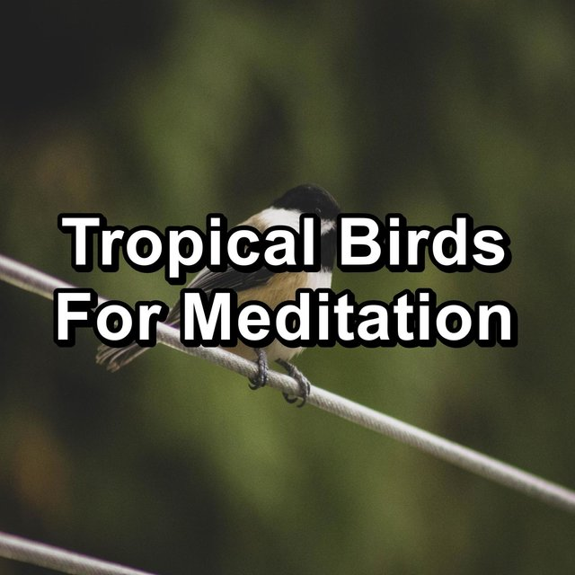 Tropical Birds For Meditation