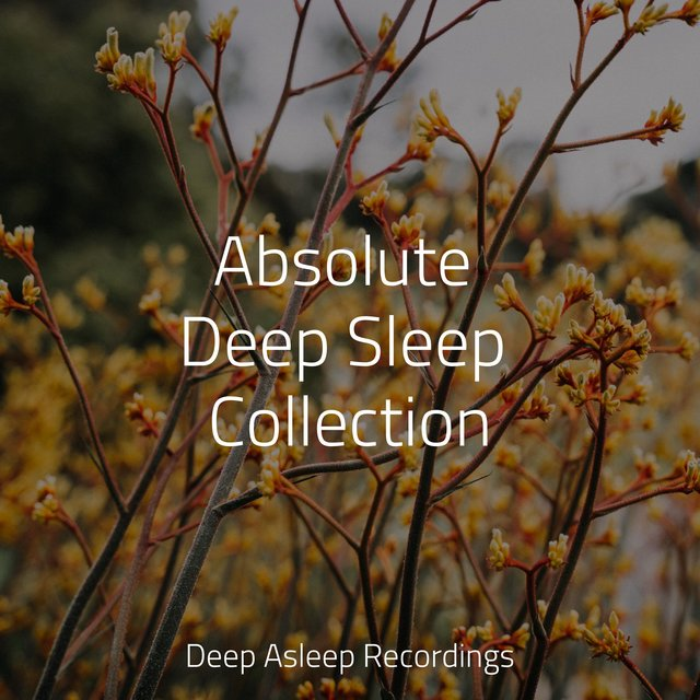 Absolute Deep Sleep Collection