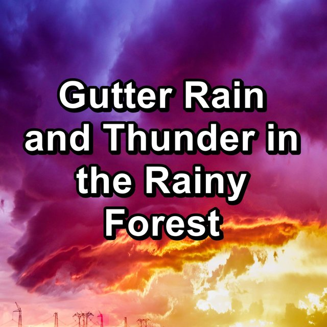 Gutter Rain and Thunder in the Rainy Forest