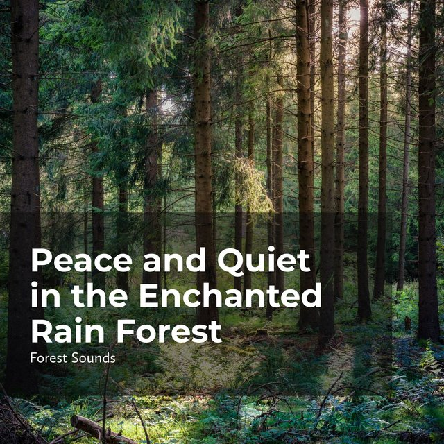 Peace and Quiet in the Enchanted Rain Forest
