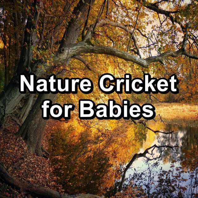 Nature Cricket for Babies
