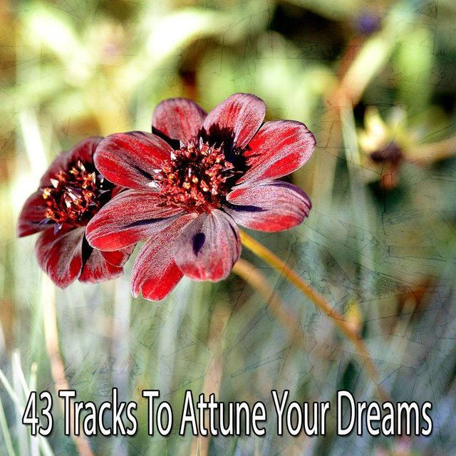 43 Tracks to Attune Your Dreams