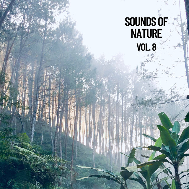 Sounds of Nature Vol. 8, Sounds of Nature Noise