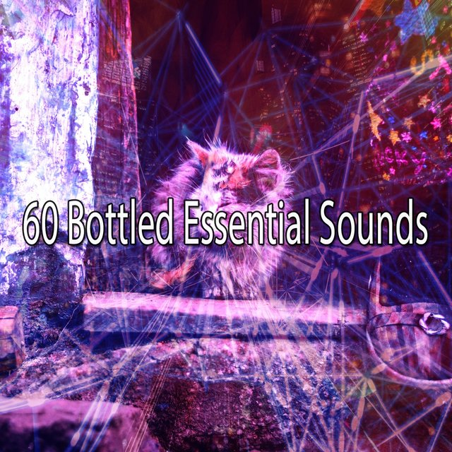 60 Bottled Essential Sounds