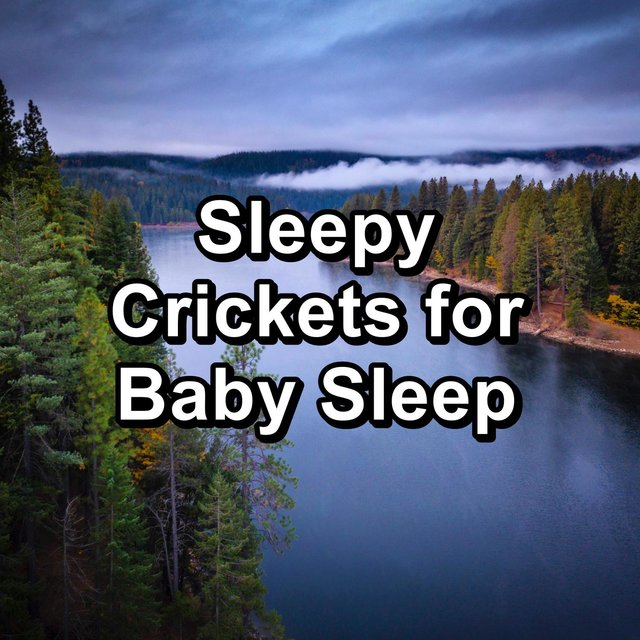 Sleepy Crickets for Baby Sleep