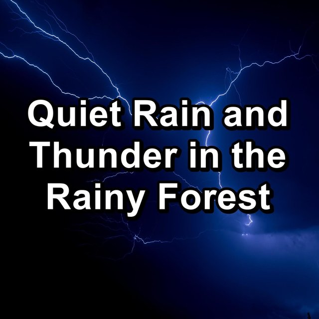 Quiet Rain and Thunder in the Rainy Forest
