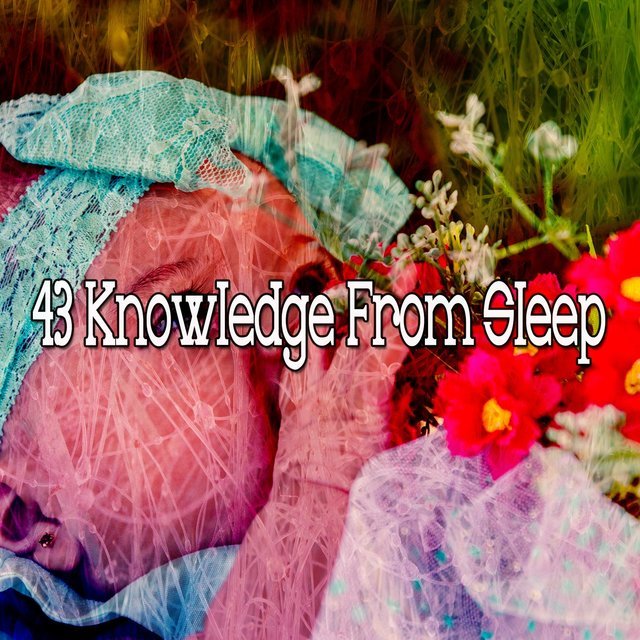 43 Knowledge from Sle - EP