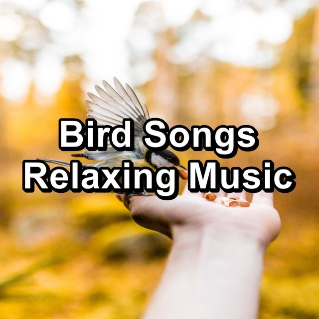 Bird Songs Relaxing Music