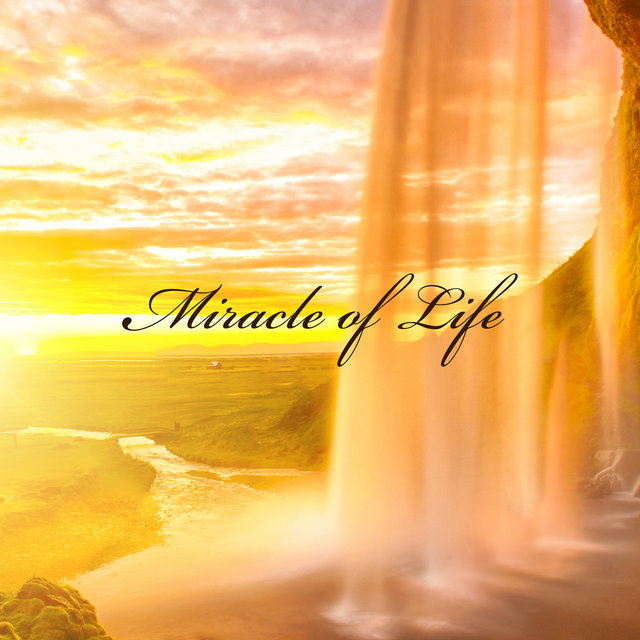 Miracle of Life: Wonderful Phenomena in Nature