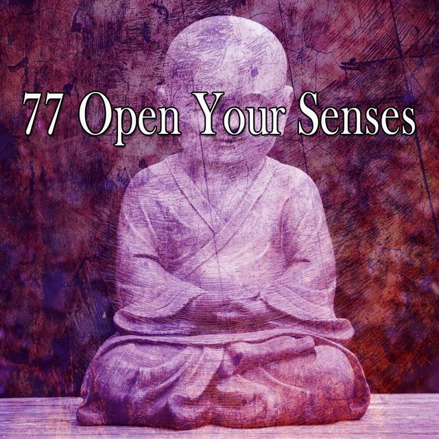 77 Open Your Senses
