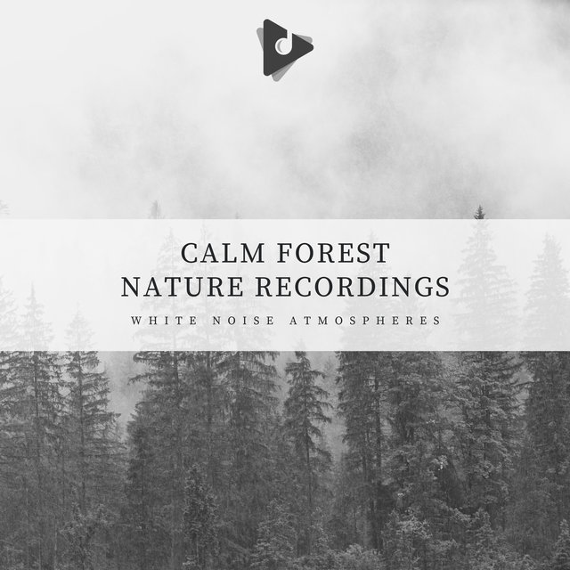 Calm Forest Nature Recordings
