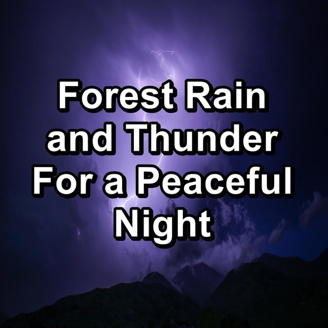 Forest Rain and Thunder For a Peaceful Night