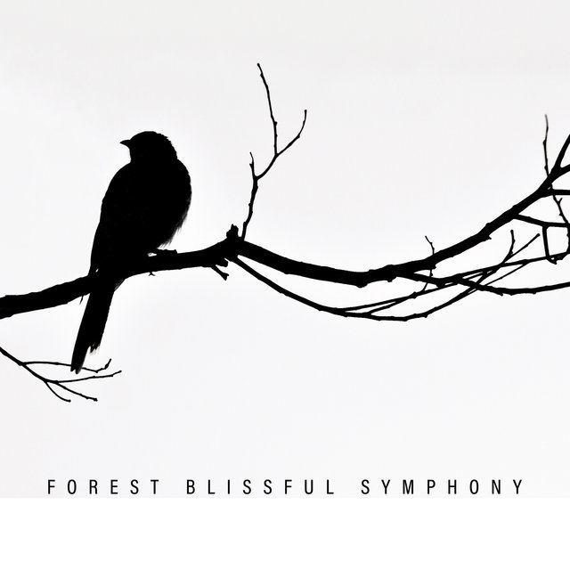 Forest Blissful Symphony – Relaxing Nature Sounds, Soft Music, Relaxed Mind, Stress Relief