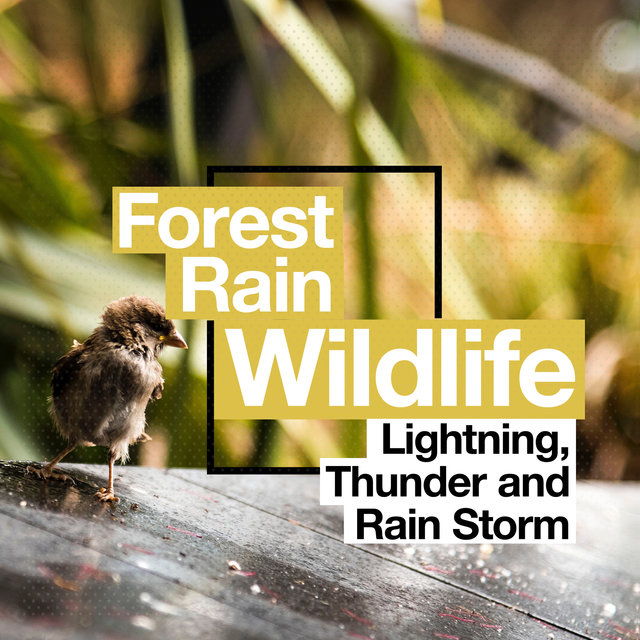 Forest Rain Wildlife