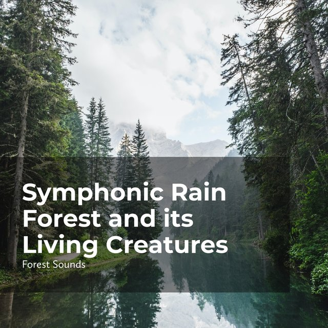 Symphonic Rain Forest and its Living Creatures