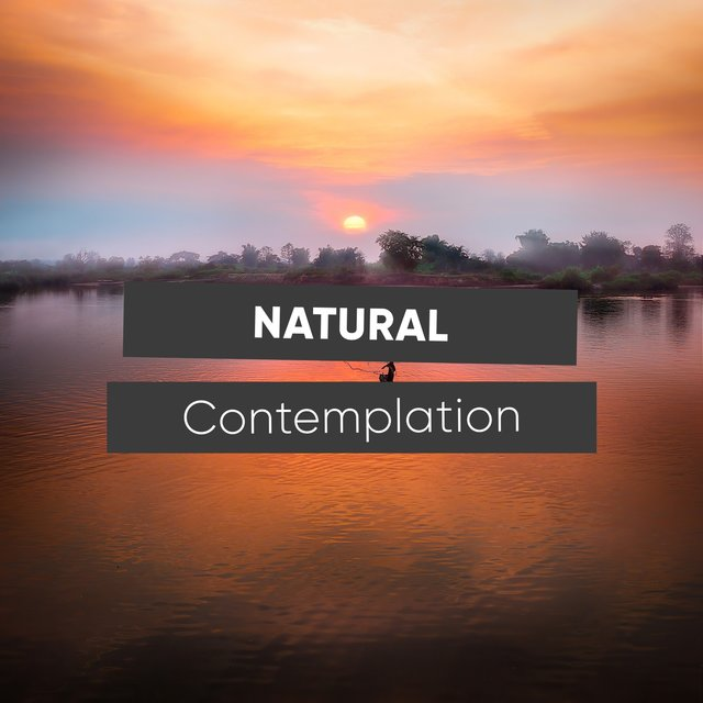 # 1 Album: Natural Contemplation