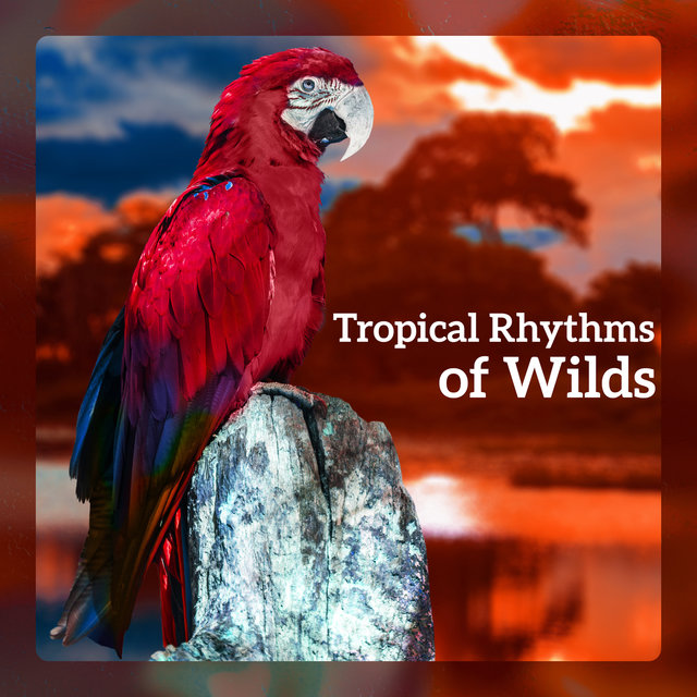 Tropical Rhythms of Wilds
