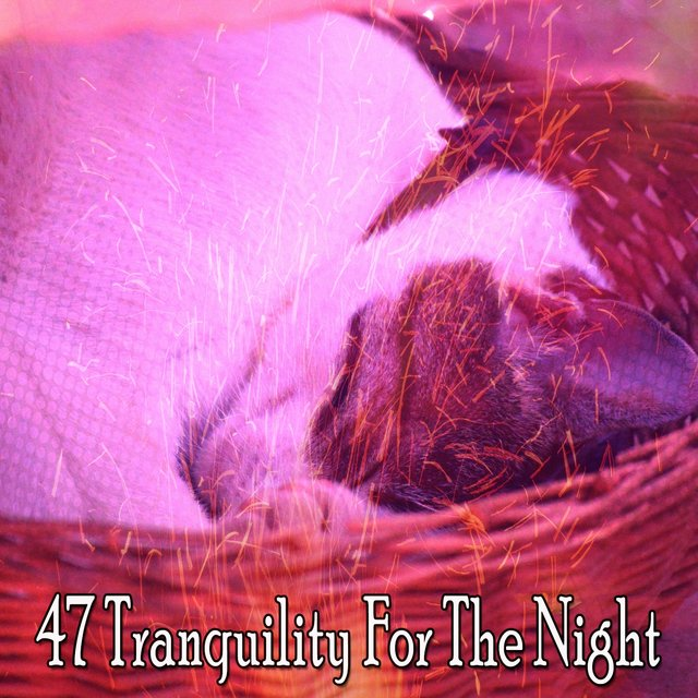 47 Tranquility for the Night
