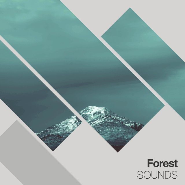 Gentle Ambient Forest Sounds