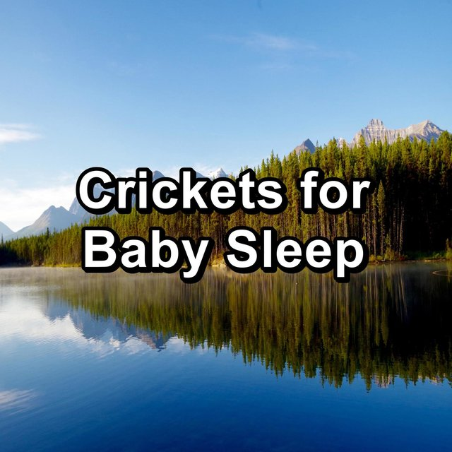 Crickets for Baby Sleep