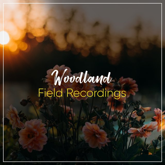 Flowing Rustic Woodland Field Recordings