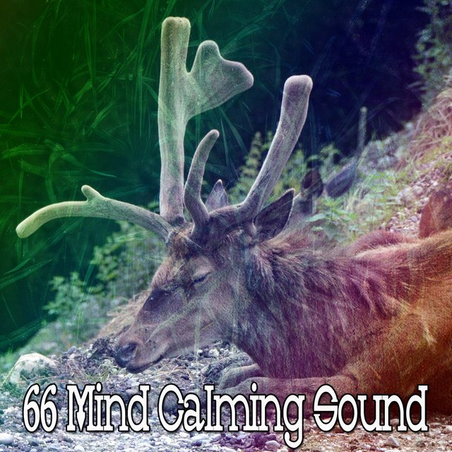 66 Mind Calming Sound