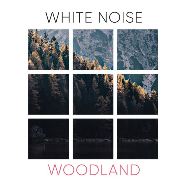 #White Noise Woodland