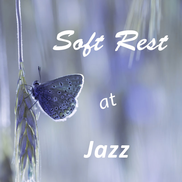 Soft Rest at Jazz - Fireplace and Hot Tea, Chocolate Cake, Interesting and Tranquil Time, Rest and Relaxation before Christmas