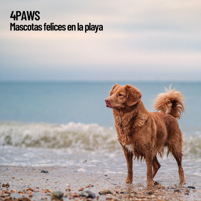 4Paws: Mascotas felices en la playa
