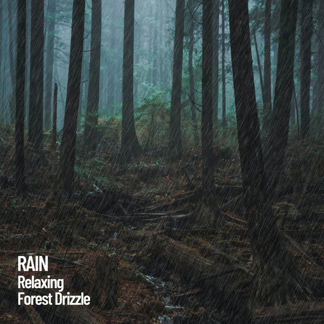 Rain: Relaxing Forest Drizzle