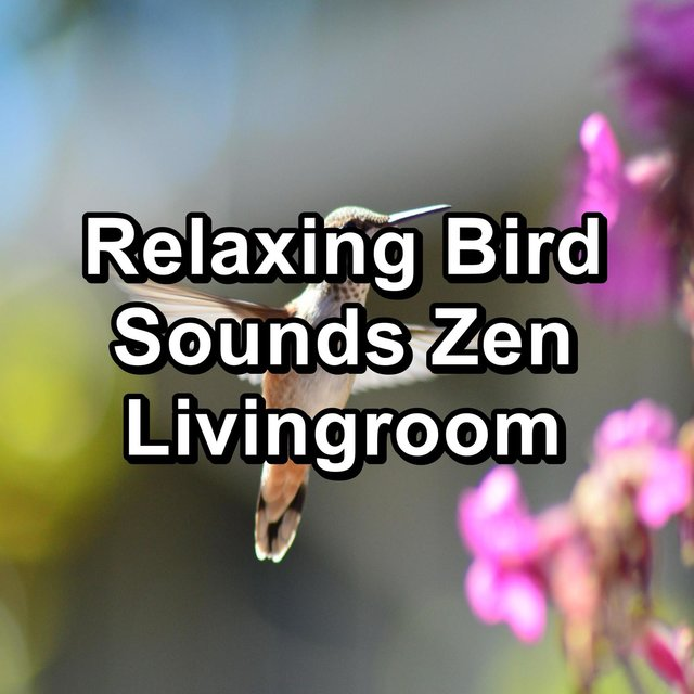 Relaxing Bird Sounds Zen Livingroom
