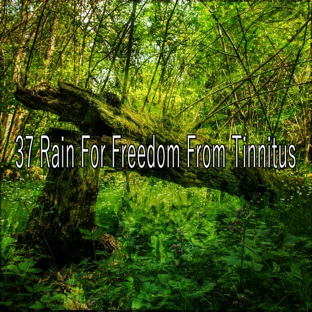 37 Rain for Freedom from Tinnitus