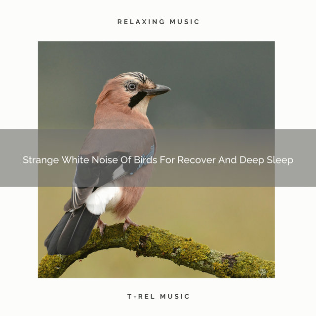 Strange White Noise Of Birds For Recover And Deep Sleep