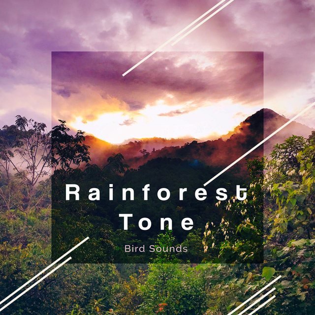 Rainforest Tone