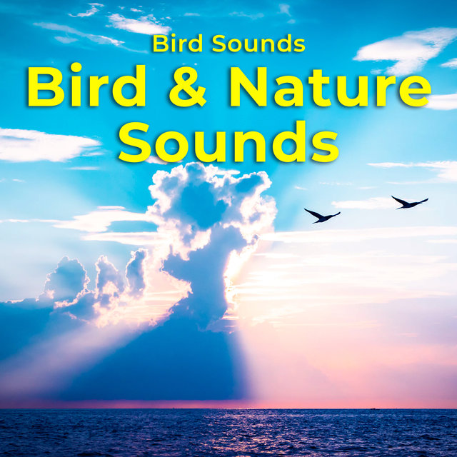 Bird & Nature Sounds