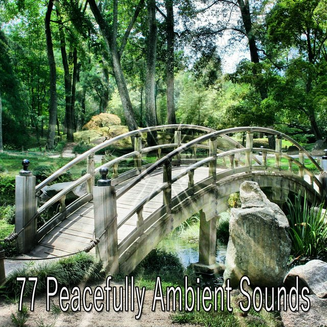 77 Peacefully Ambient Sounds