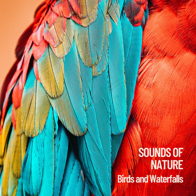 Sounds of Nature: Birds and Waterfalls