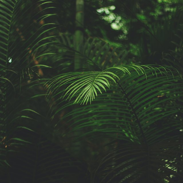 Blissful Sounds of Nature | Ambient Melodies to Relax