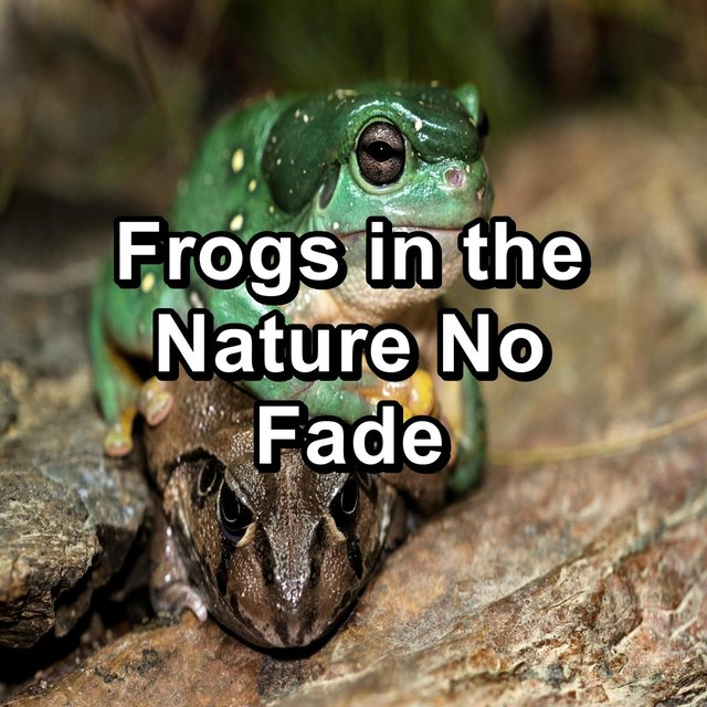Frogs in the Nature No Fade