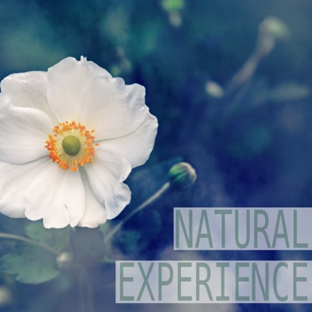 Natural Experience