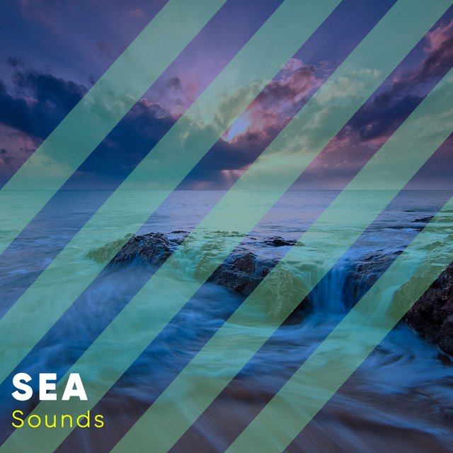 # 1 Album: Sea Sounds
