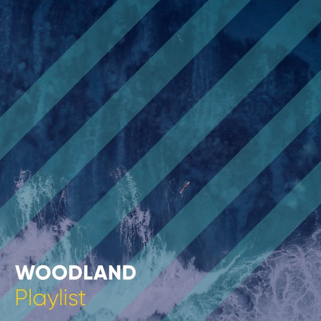 Relaxing Native Woodland Playlist