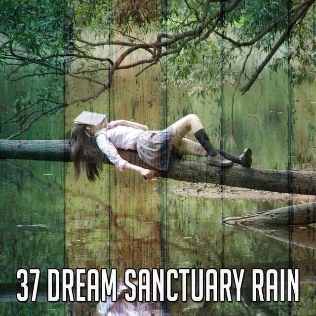 37 Dream Sanctuary Rain