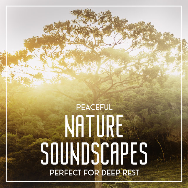 Peaceful Nature Soundscapes Perfect for Deep Rest