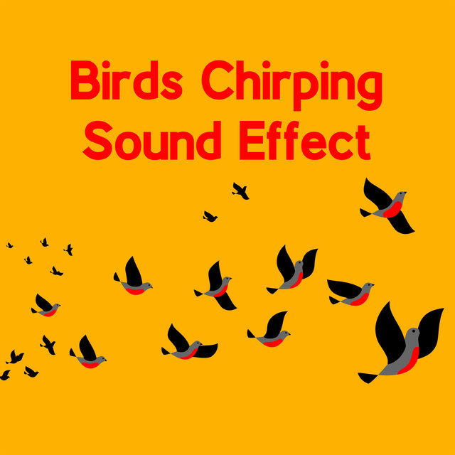 Birds Chirping Sound Effect - Relaxing Soundscapes, Study Music, Concentration Sounds, Learning Music, Inner Focus